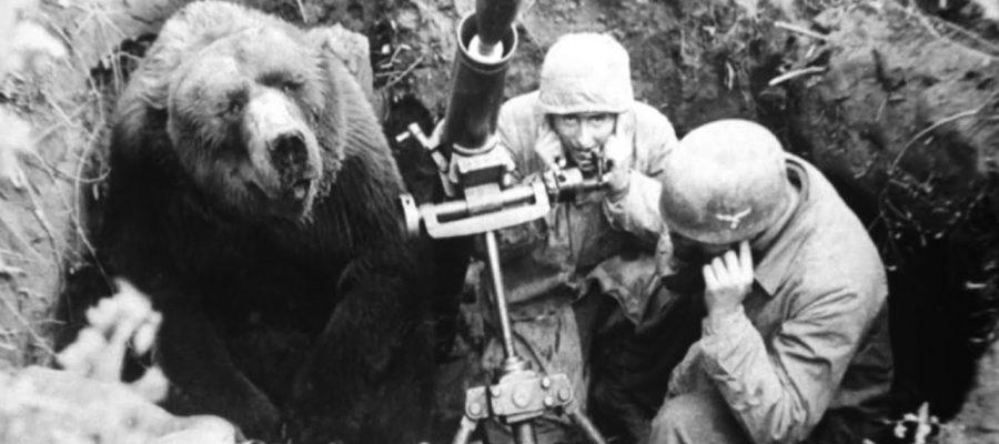 El café de la historia - Wojtek el oso soldado
