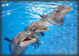 El juicio a los delfines