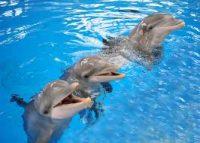 juicio a los delfines