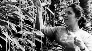 El café de la historia - La cosecha suiza de spaguettis