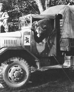 Wojtek, el oso soldado