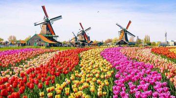 El café de la historia - La burbuja del tulipán