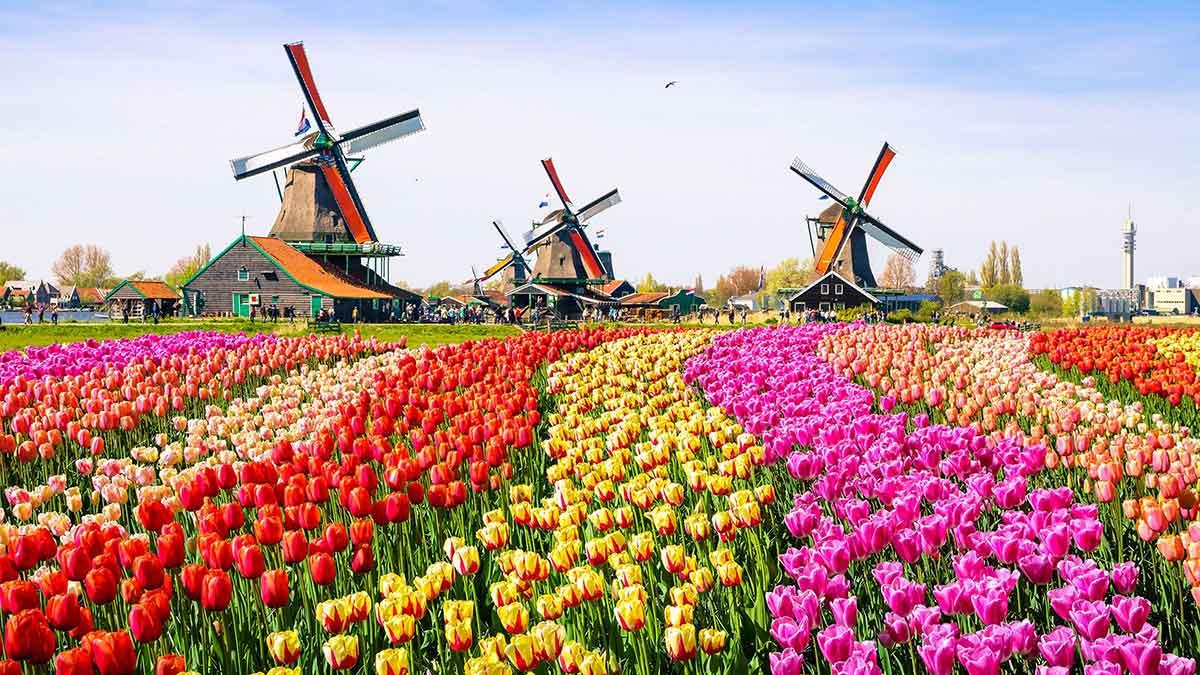 La burbuja del tulipán