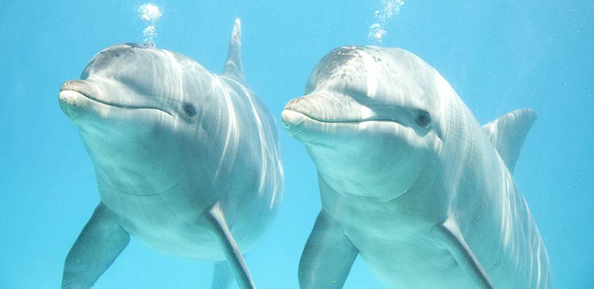 Pleito de los delfines