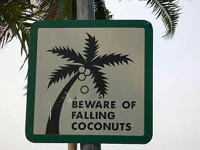 Caídas de cocos Premios IG Nobel