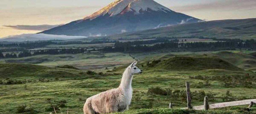 El café de la historia - Refranes ecuatorianos