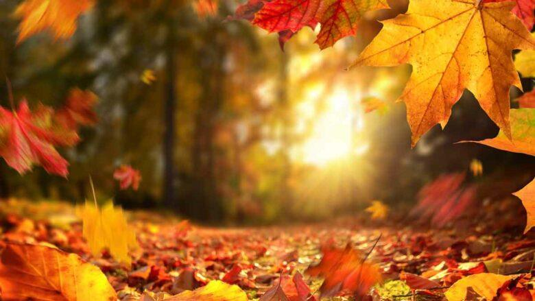 El café de la historia - Refranes sobre el otoño