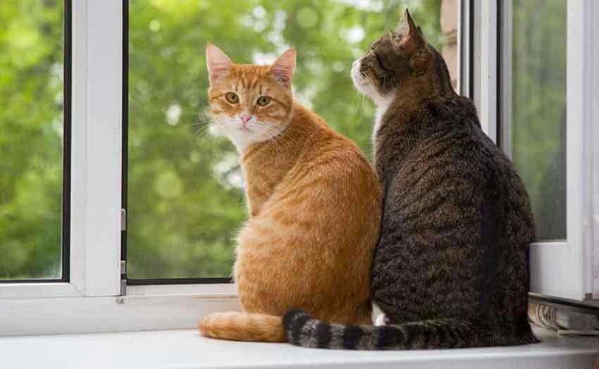 Refranes de gatos